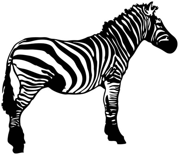 clipart zebra images - photo #18