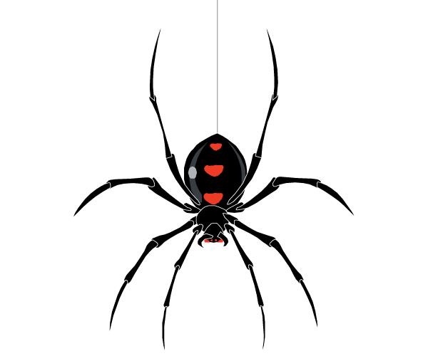 Spider Vector | Download Free Vector Art | Free-Vectors