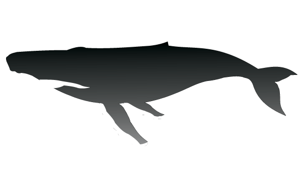 Humpback Whale Silhouette Vector   Download Free Vector ...