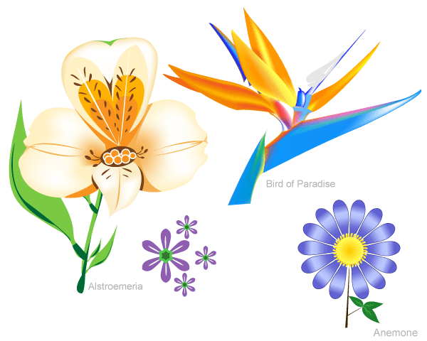 Vector Flowers Set