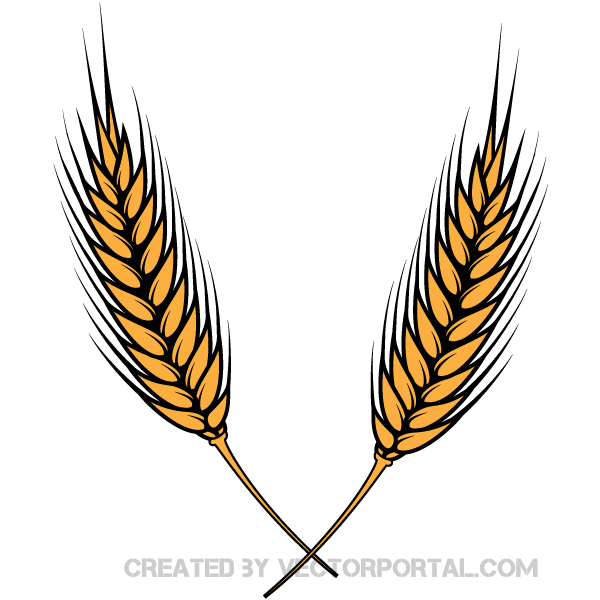 Wheat Vector Image | Download Free Vector Art | Free-Vectors