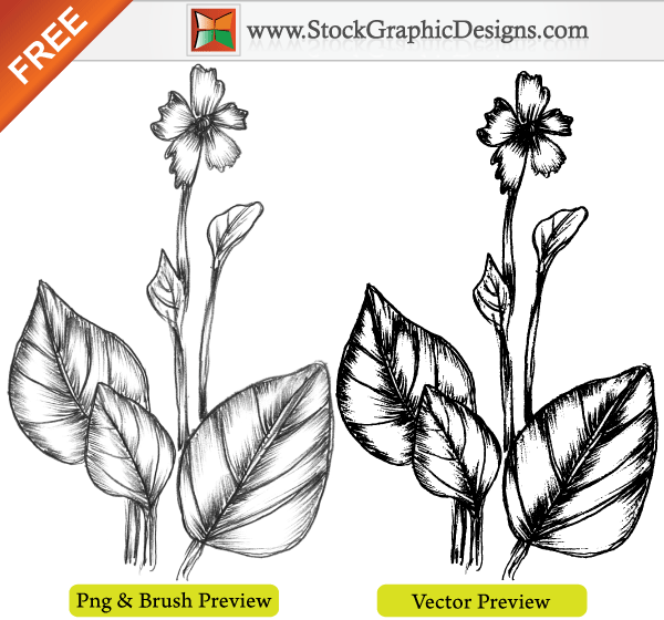 Nature Hand Drawing Hand Drawn Sketchy Plant Free