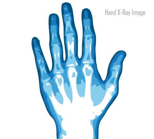 xray hand vector image download free vector art free
